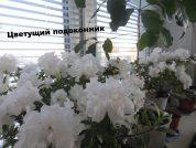 """Интернет магазин комнатных цветов """"Цветущий подоконник"""""""