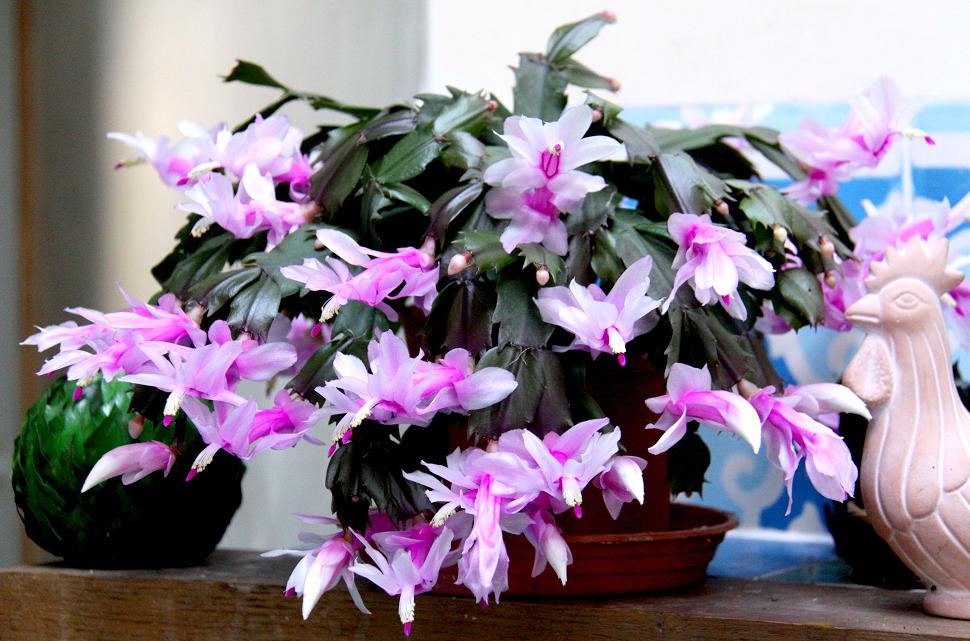 Шлюмбергера фото различных расцветок