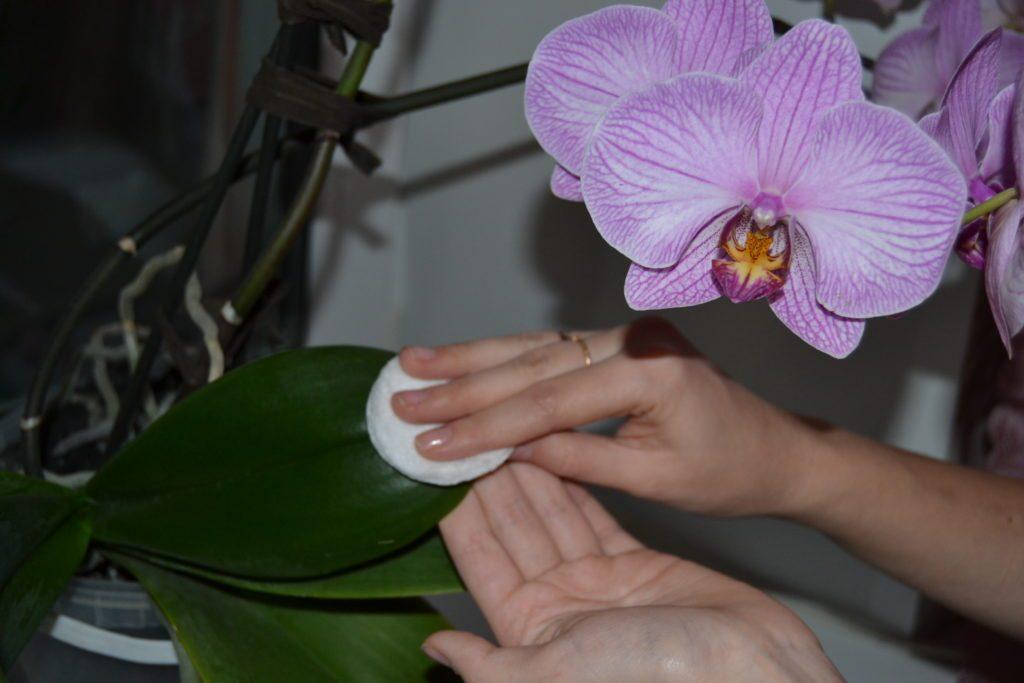 Как обработать орхидею янтарной кислотой